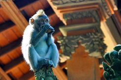 Visiting Sacred Monkey Forest, Bali