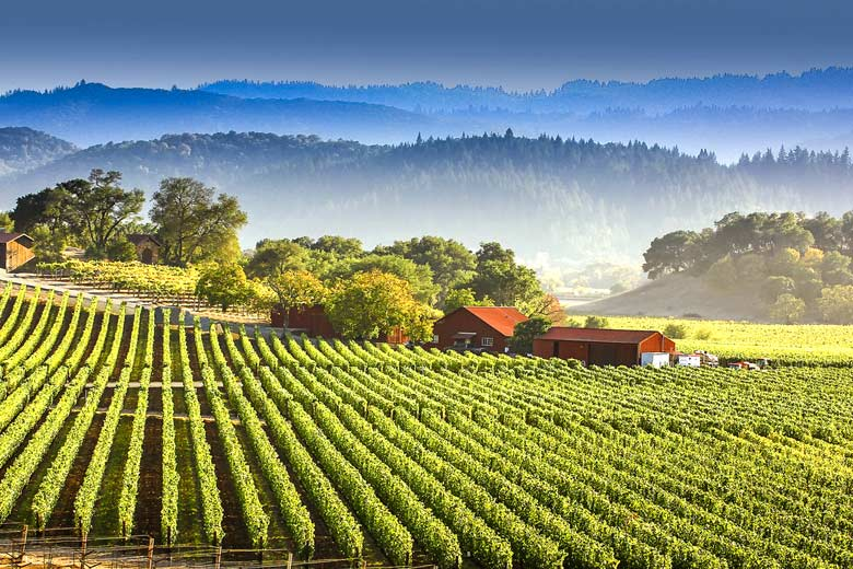 Californian wineries & wine trails © James Dalsa - Flickr Creative Commons