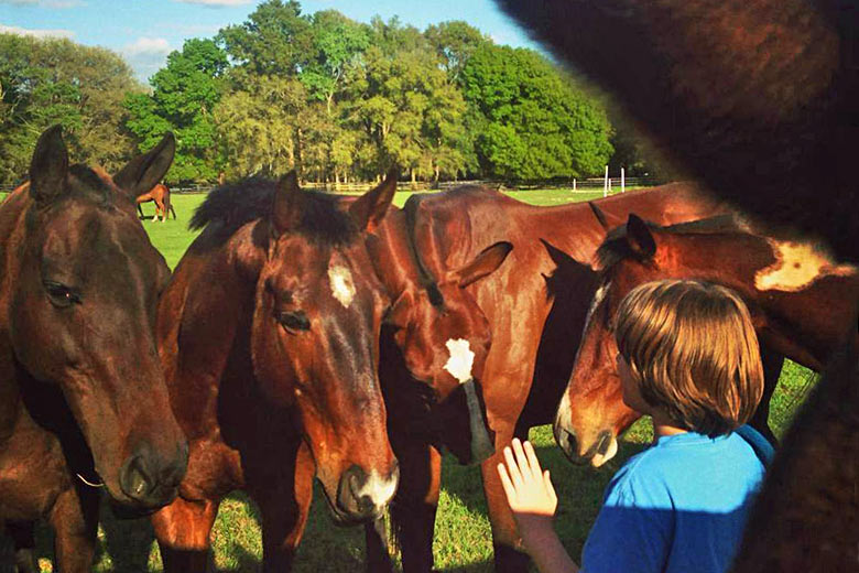 Up close and personal with friendly horses - photo courtesy of Cactus Jack's Trail Rides