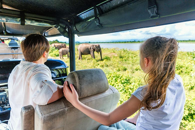 Close encounter with wild elephants in Sri Lanka © BlueOrange Studio - Fotolia.com