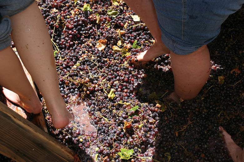 Crushing grapes the traditional way © Jeffrey Keeton - Wikimedia Commons