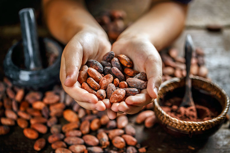 Discover how chocolate is made in St Lucia © Grafvision - Fotolia.com