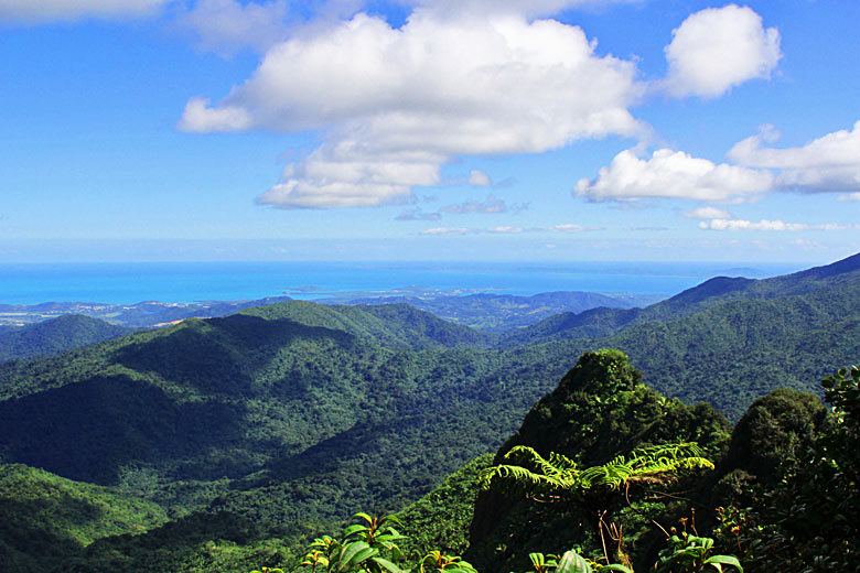 High in the mountains of El Yunque National Forest © Anette Knudsen