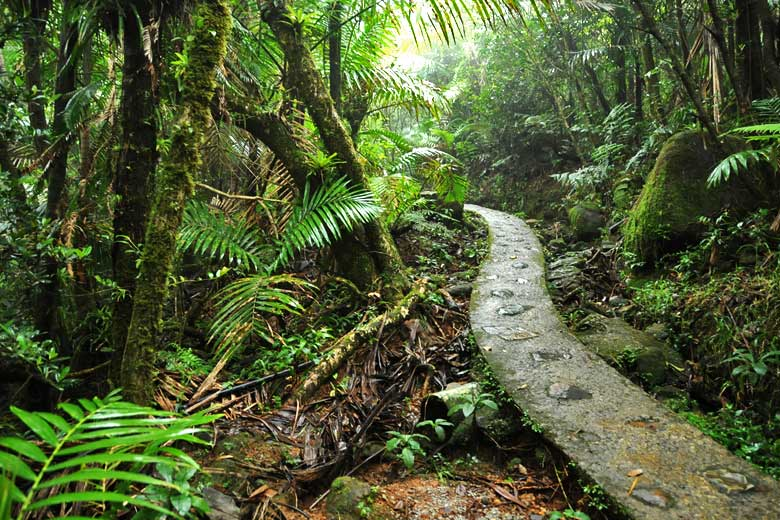 On the El Yunque rainforest trail, Puerto Rico © Diego Cupolo- Flickr Creative Commons