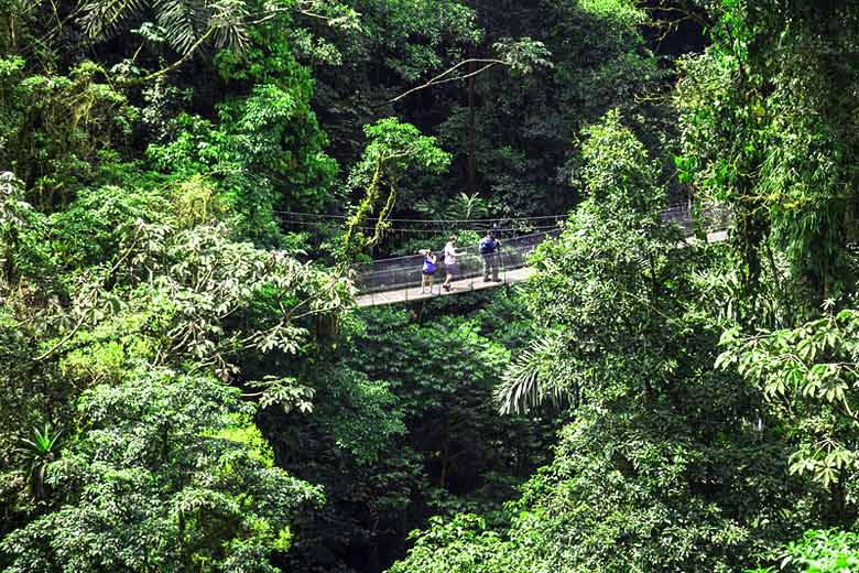 Exploring the forest canopy in Costa Rica © Robin Runck - Dreamstime