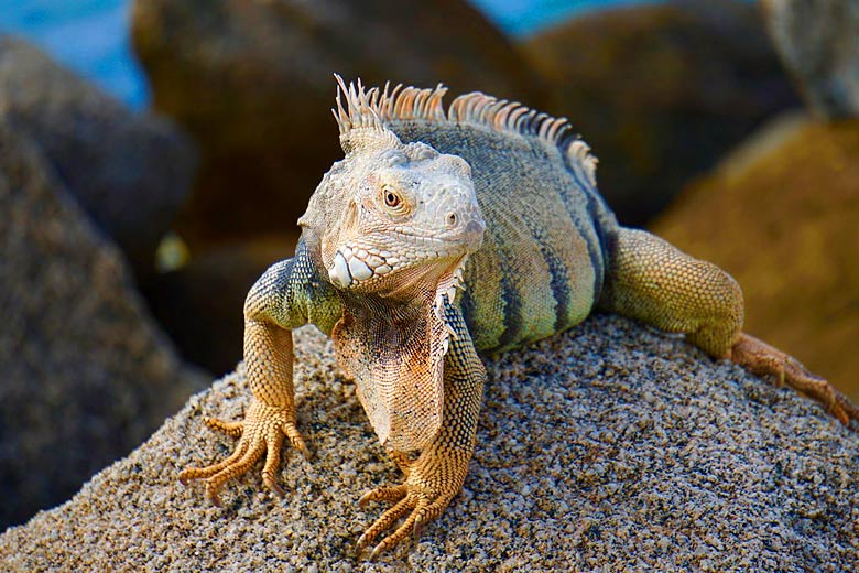 Meet the friendly locals at Sandals Grenada © a200/a77Wells - Flickr Creative Commons