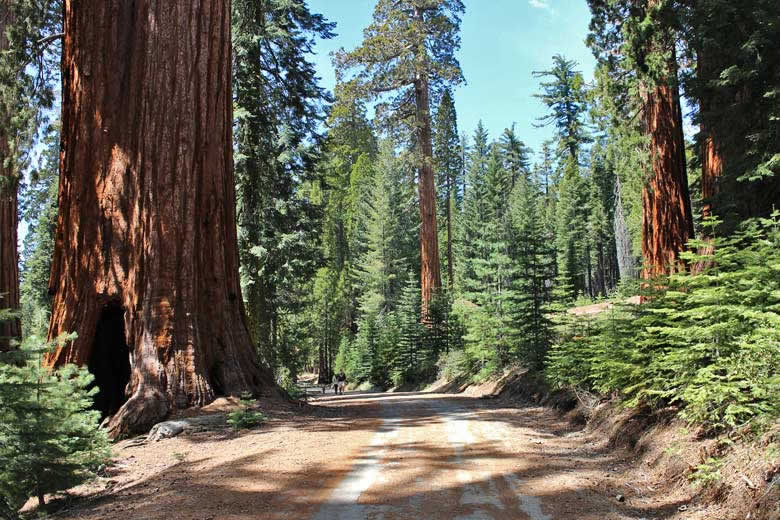 Walking through sequoia forest, California © energylabsbr - Flickr Creative Commons