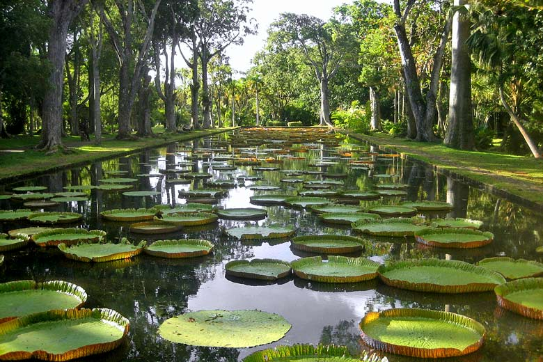 Giant waterlilies in the Botanical Garden, Mauritius - photo courtesy of Mauritius Tourism Promotion Authority