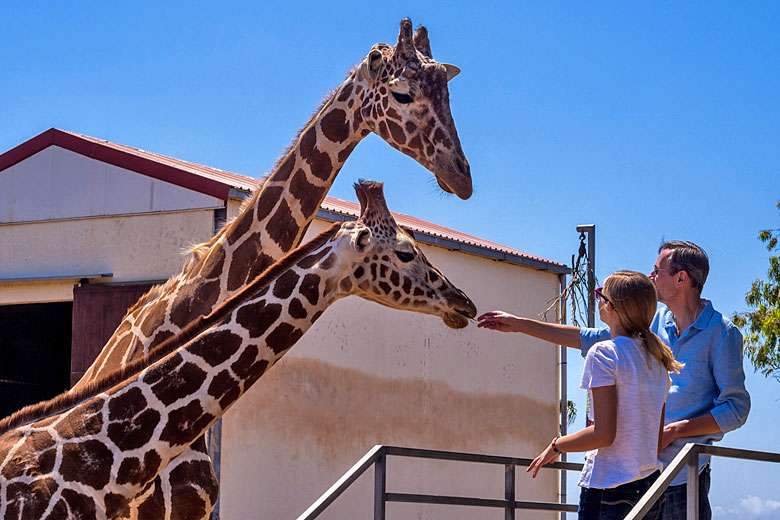 New found friends at Paphos Zoo, Cyprus © Sergey Galyonkin - Flickr Creative Commons