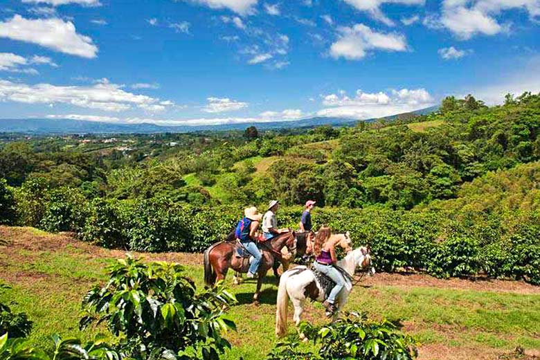Horse-riding on a plantation 'coffee tour', Costa Rica - photo coutesy of www.fincarosablanca.com