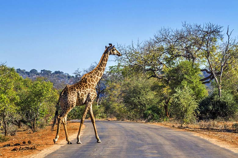 How to get the most out of Kruger National Park, South Africa © UTOPIA - Fotolia.com