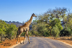 How to get the most out of Kruger National Park