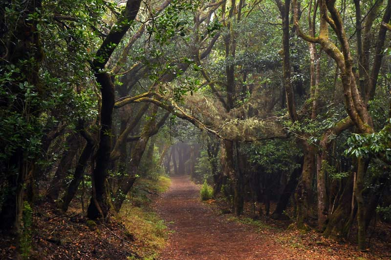 Laurel forest, La Gomera © Joachim S Müller - Flickr Creative Commons