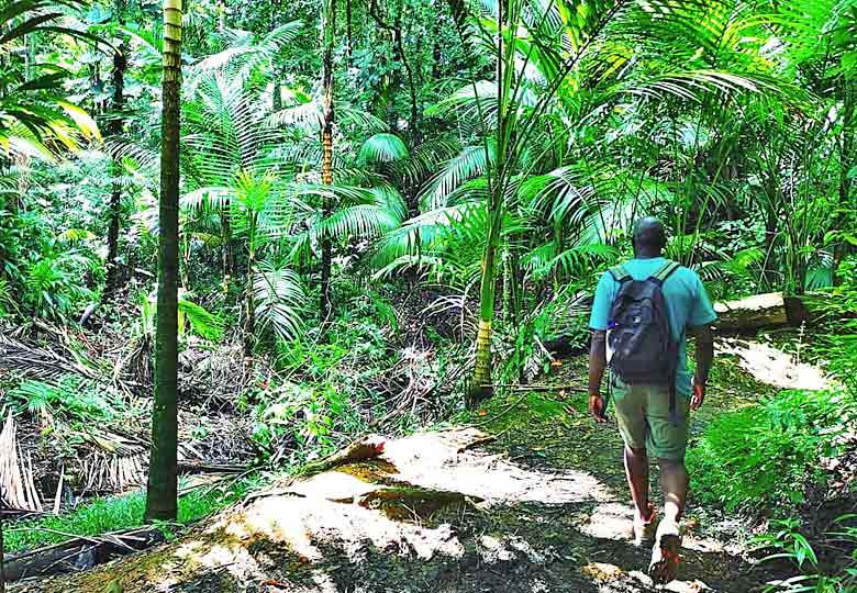 Book an expert guide to show you Main Ridge Forest Reserve, Tobago © Kirsten Henton