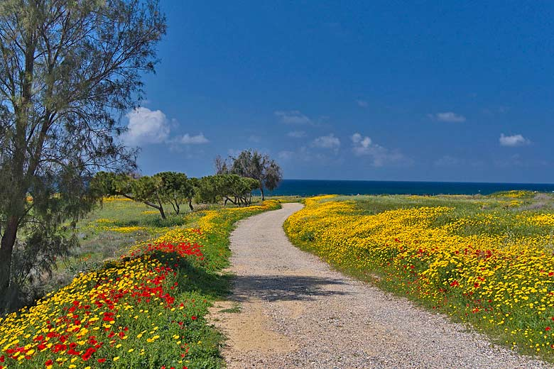 Path down to the sea at Paphos, Cyprus © Oleg - Flickr Creative Commons