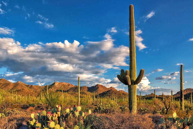 Saguaro National Park, near Tucson Arizona © lucky-photo - Fotolia.com