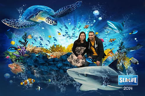 If you want to visit the flagship Sea Life Centre London Aquarium, you can make some great savings with our Sea Life Centre offers that cover one or more other London attractions. You can often find big discounts by bundling your Sea Life Centre tickets with tickets for the London Eye, Madame Tussauds and the London Dungeon, too!