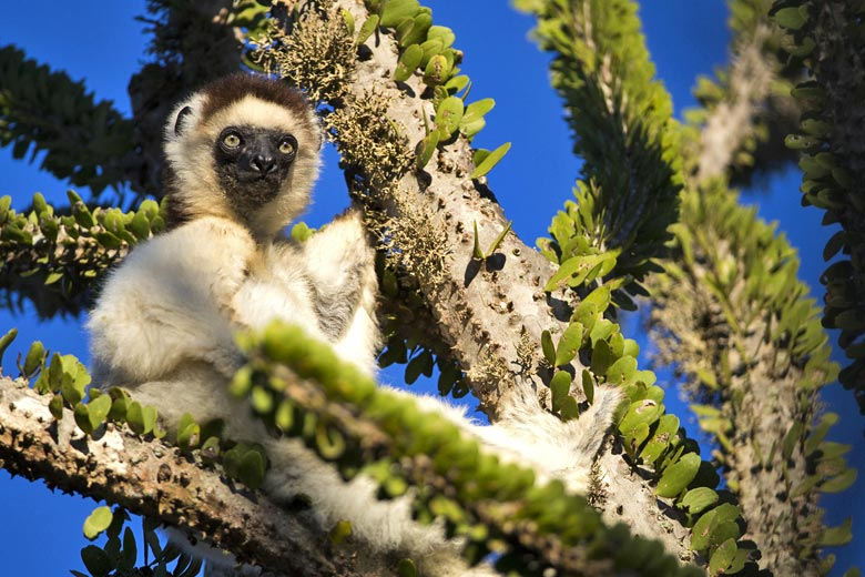 Some of the best wildlife tours for 2018 © Aussieanouk - Fotolia.com