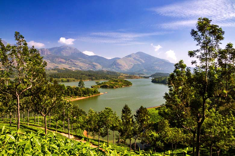 Typical scenery in the Tea Country of eastern Kerala © Rudi Ernst - Fotolia.com