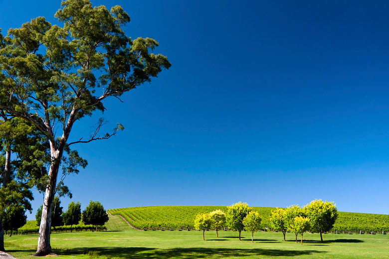 Vineyard in the Adelaide Hills, South Australia © Juan Alberto Garcia Rivera - Flickr Creative Commons