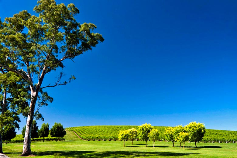 Vineyard in the Adelaide Hills © juanalbertogarciarivera - Flickr Creative Commons