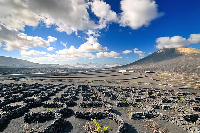 Vineyard in typical Lanzarote landscape at La Geria © Alexchered - Dreamstime.com