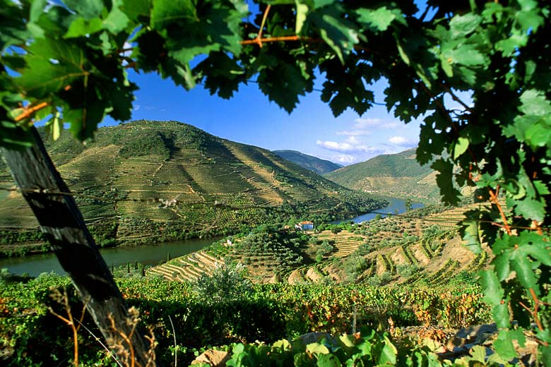 Vineyards in the Douro Valley - photo courtesy of Visit Portugal
