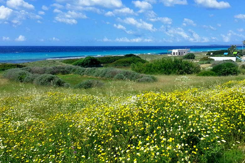 Walking in Menorca, wild flowers in the spring © Paul Seligman - Flickr Creative Commons