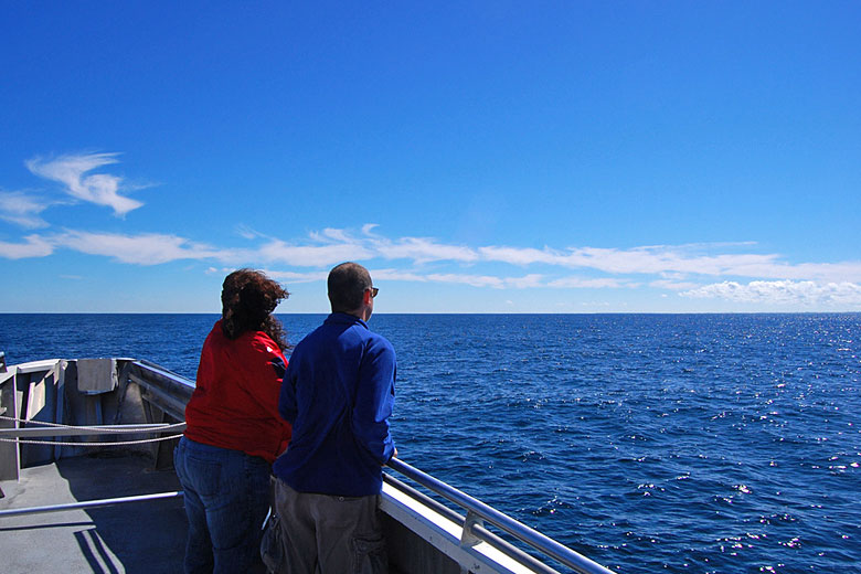 Whale watching off Boston in the summer sunshine © Ptwo - Flickr Creative Commons