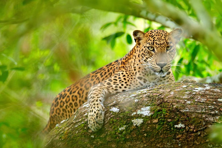 Why wildlife lovers should visit Sri Lanka © Ondrejprosicky - Fotolia.com