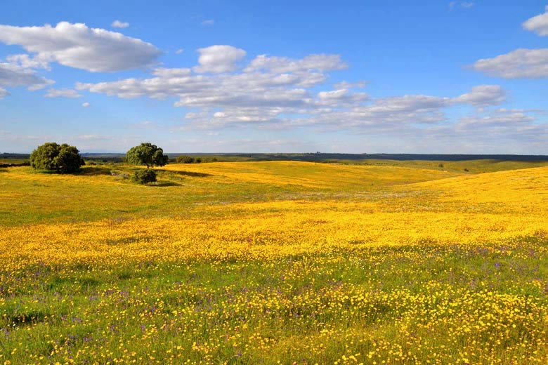 Why you need to get to know the Alentejo, Portugal - photo courtesy of Visit Portugal