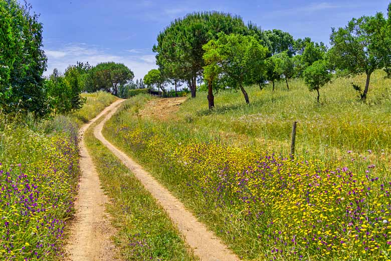 Wild flowers along the Rota Vicentina, southwest Portugal © Lisandro Trarbach - Fotolia.com