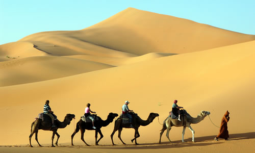 Camel caravan through the sand dunes in the Sahara Desert, Morocco © Vladimir Wrangel