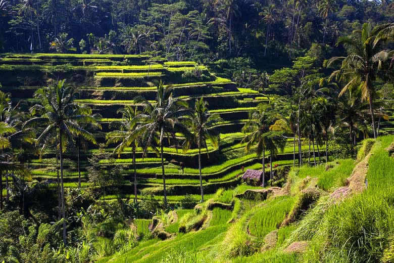 Exploring Bali's rice terraces © kayugee - Flickr Creative Commons