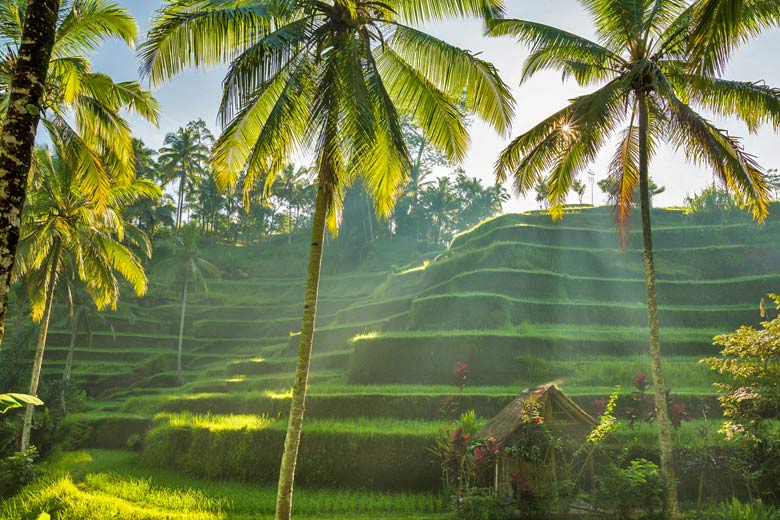 Rice terraces in Bali © asab974 - Fotolia.com