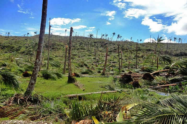 Coconut plantation in the Philippines in the aftermath of a typhoon © Sonny Day - Wikimedia Commons