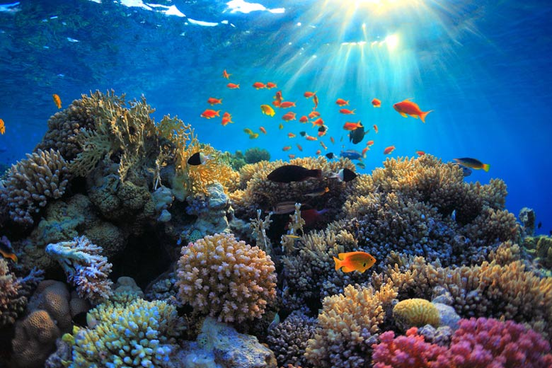 Underwater Red Sea © sborisov - Fotolia.com